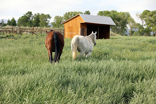 durango co equestrian horse layups and retirement facility